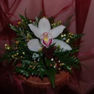 Egy fej Orchidea