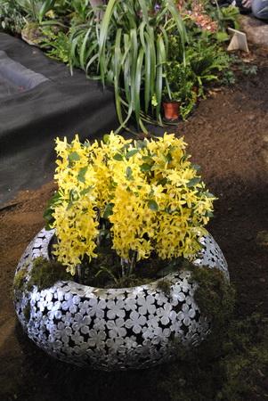 csoportos orchideák