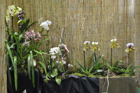 különböző orchidea fajták