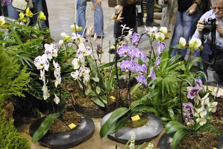 különböző színű orchideák