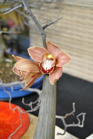 kompozíció orchideával2