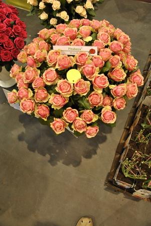 különleges rózsa nemesítés