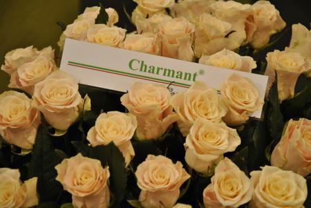 ez egy másik nemesítés, nagyon tetszett a rózsafej formája