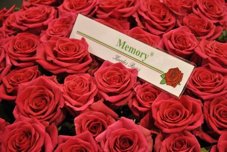 pinkes rózsa, nem egészen piros és bordó sem