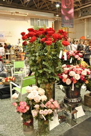 2 méter hosszú szárú rózsa